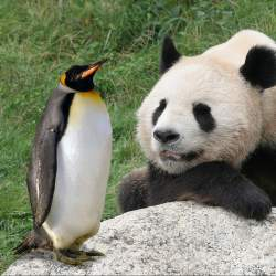 penguin panda updates